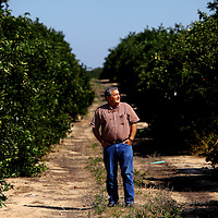 LAKE WALES, FL -- October 13, 2010 -- Citrus grower Marty McKenna poses for a portrait in one of his orange groves in Lake Wales, Fla., on Wednesday, October 13, 2010.  The housing bust left orange groves - which were scooped up by investors - unattended, overgrown and full with disease.  That disease is spreading to healthy, adjacent fields - leaving citrus growers scrambling to replant lost production..ORANGES