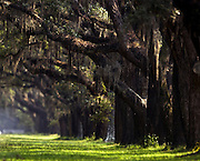 Spainish moss covered live oak trees line the drive August 6, 2006 at the Wormsloe plantation in Savannah, Ga.