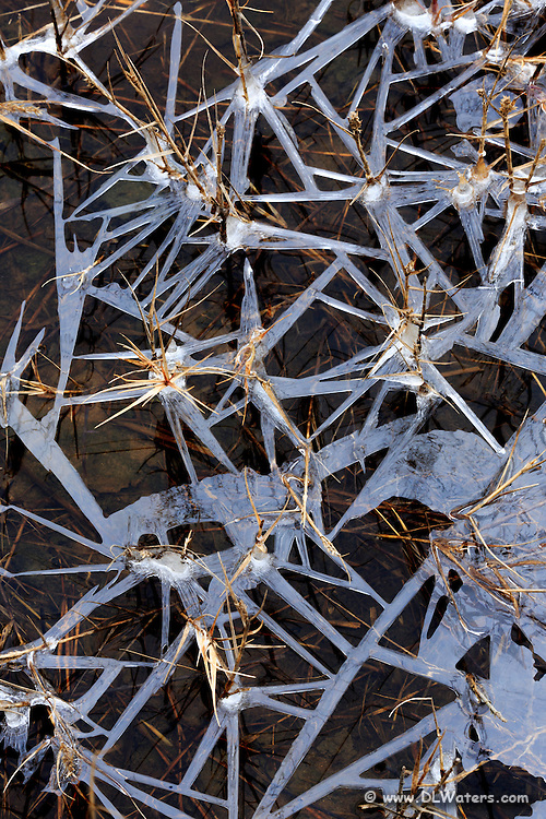 A pattern of ice and grass at Wancheese on the Outer Banks.