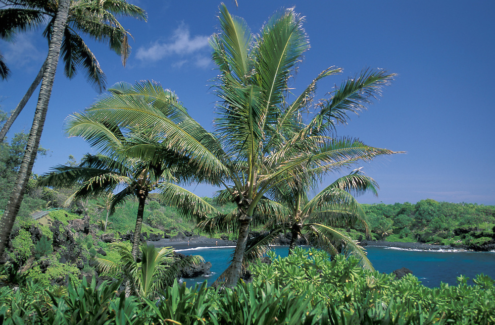 Palm Trees and Black Sand Beach at Waianapanapa State Park, Maui, Hawaii, USA