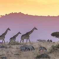 AFRICA - MASAI MARA