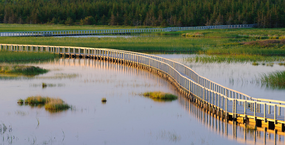 Boardwalk trail across wetlands at Greenwich, Prince Edward Island National Park, PEI, Canada.