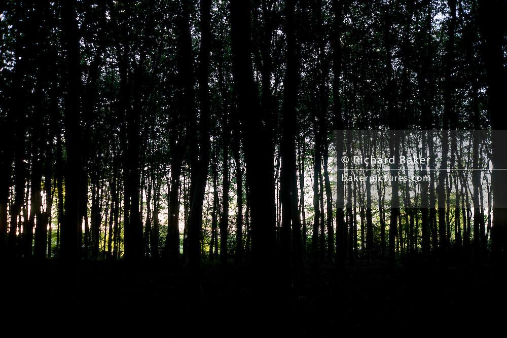 Late afternoon sun illuminates woodland to make an inspiring view.