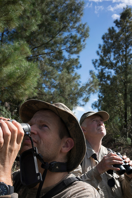 Ornithologists Martjan Lammertink and Tim Gallagher  search for ivory-billed woodpeckers in Humbolt National Park in Eastern Cuba on Feb. 4, 2016.