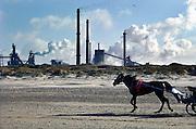 Nederland, Velsen, 26-2-2006..Beverwijk, IJmuiden, Wijk aan zee...Corus, hoogovens. Metaalindustie, staalproductie, staalproduktie, zware industrie, vraag en aanbod staal op wereldmarkt, smelterij, luchtvervuiling, luchtverontreiniging, milieu, milieuvervuiling, luchtkwaliteit, stof, stofdeeltjes, economie, british steel, fusie, werkgelegenheid..Foto: Flip Franssen/Hollandse Hoogte