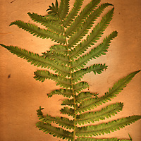 A green fern on an orange background