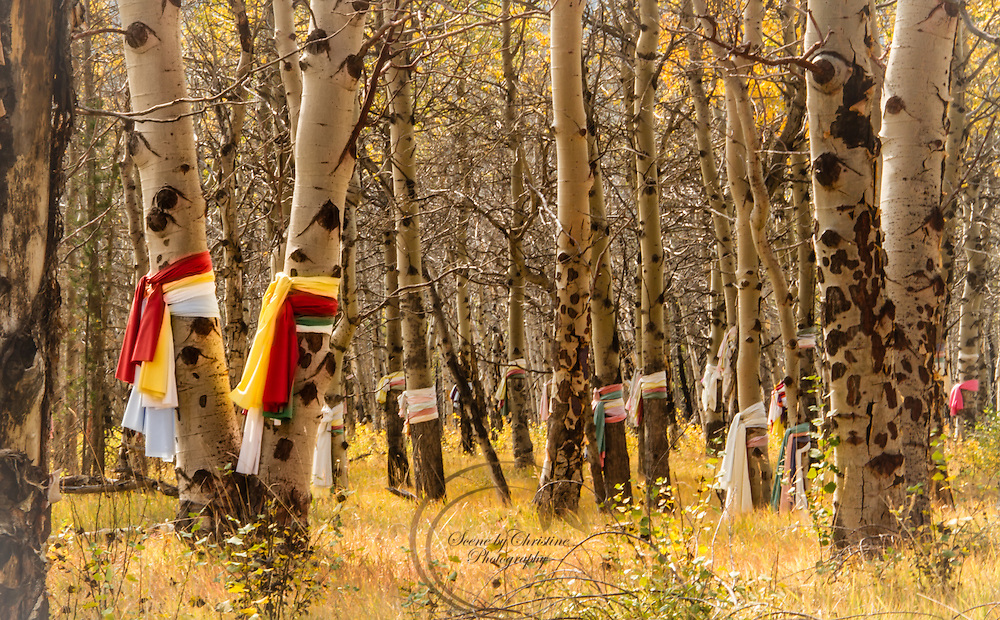 Native American Prayer Flags at Landslide Lake in Banff National Park hang as testament to the very sacred area.