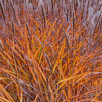 Sweet grass in garden at Inn at Cedar Falls