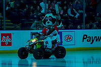 KELOWNA, BC - FEBRUARY 15: Rocky Raccoon, the mascot of the Kelowna Rockets enters the ice on his Polaris ATV against the Red Deer Rebels at Prospera Place on February 15, 2020 in Kelowna, Canada. (Photo by Marissa Baecker/Shoot the Breeze)