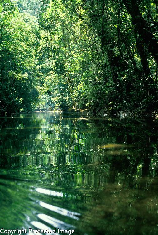 Small river in rainforest, Gunung Mulu National Park, Malaysia, Borneo, Sarawak.