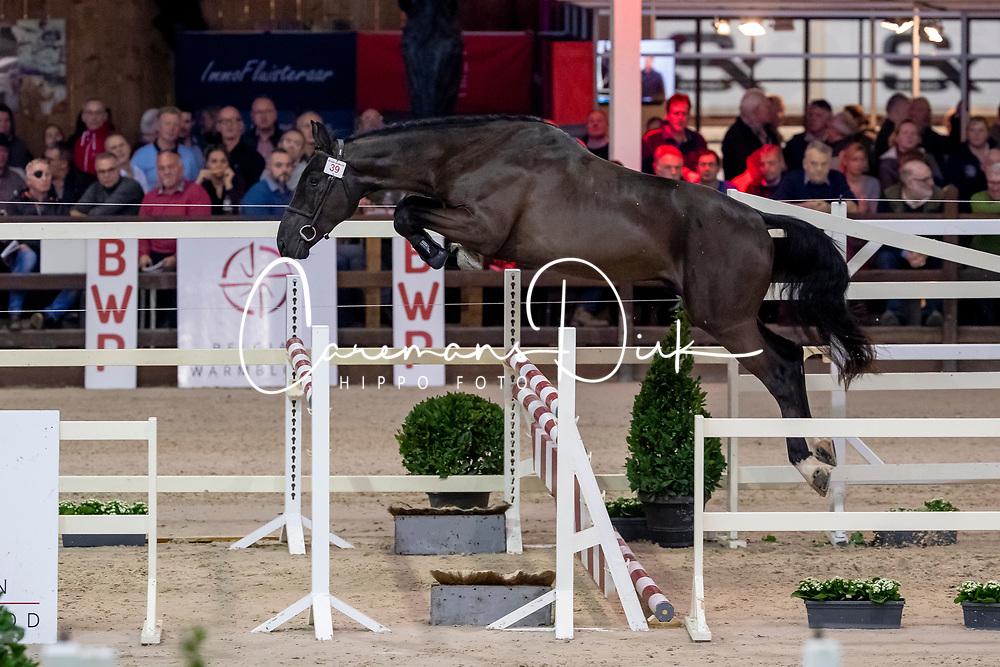 039, Radjah van den Dries<br /> BWP Hengstenkeuring -  Lier 2020<br /> © Hippo Foto - Dirk Caremans<br />  17/01/2020