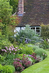 Border at Eastgrove Cottage in spring. Tulipa 'Bleu Aimable' with Erysimum 'Bloomsy Baby Purple' (wallflower) and Viola cornuta in the foreground