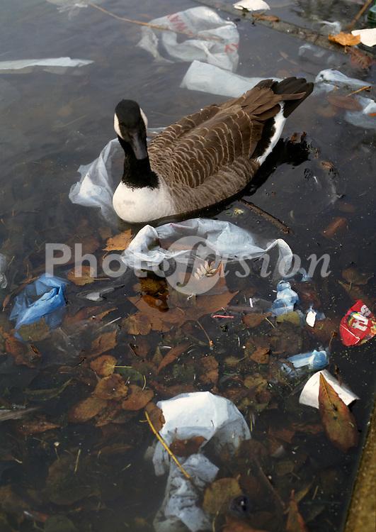 Goose swimming in pond full of litter; Clapton London UK