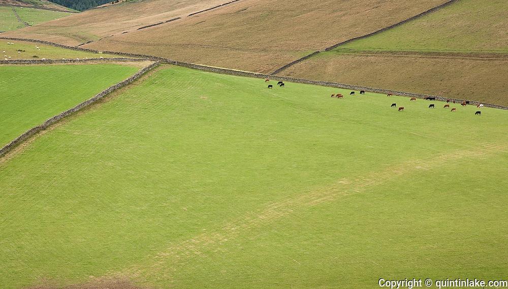Fields Near Traquair, Southern Uplands, Scotland