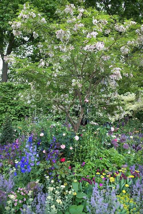 Celebrating the centenary of gardening at Hidcote Manor including Styrax japonicus (Japanese snowbell), Tulipa 'Black Jack', Nepeta faassenii, Rosa 'Fantin-Latour', Allium christophii and Ranunculus aconitifolium 'Flore Pleno'<br /> <br /> 'The Chris Beardshaw Garden'<br /> Design by Chris Beardshaw  <br /> RHS Chelsea 2007 Silver-Gilt Medal.