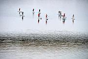Nederland, the netherlands, Nijmegen, 31-8-2016In de spiegelwaal, onderdeel van het nieuwe rivierpark, doet men aan SUPpen . Het is momenteel de snelst groeiende sport ter wereld . SUP staat voor Stand Up Paddle . Door middel van een lange peddel kun je staand peddelen op een breed, stabiel surfboard .Foto: Flip Franssen
