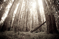 Scenic image of Redwood National Park, CA