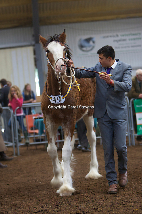 North West and Wales Shire Foal Society Show 2012<br />