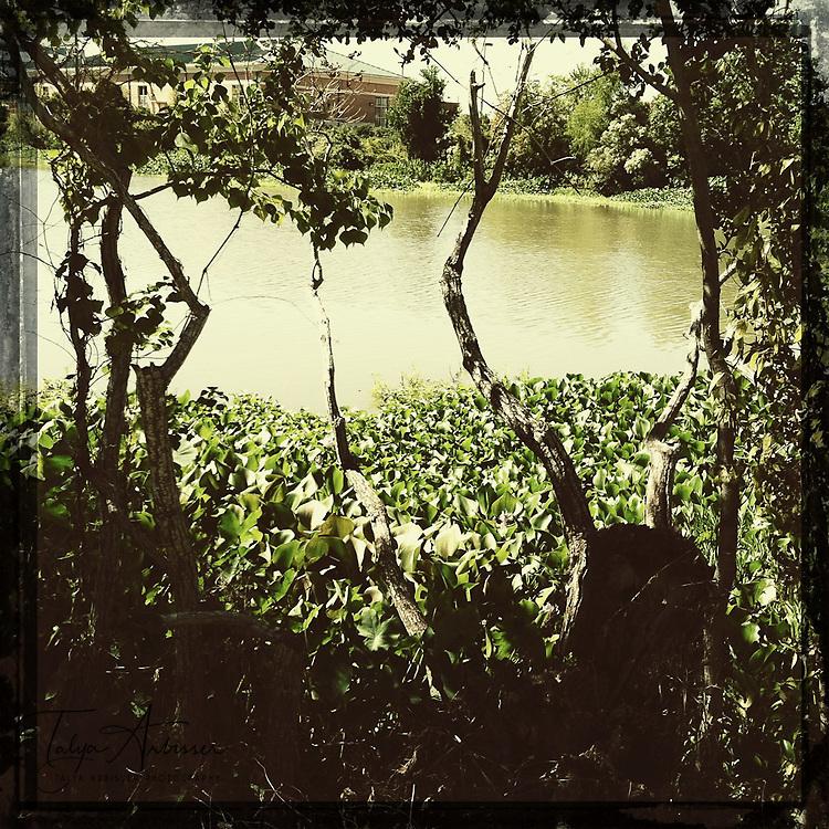 Swampy - Sugar Land, Texas
