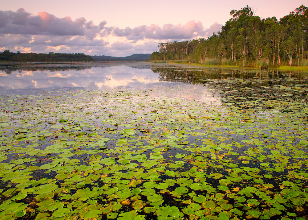 The vibrant green lilypads scattered across the water take your eye back into the scene as the last pinks leave the sky to see the end of another day.