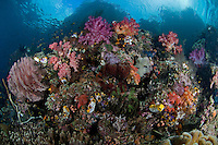 Rainbow of Soft Corals, and Overhanging Island Cliffs