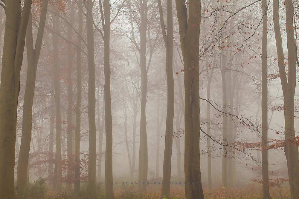 Finally got a beautiful foggy dawn in Thetford Forest today which didnt disappear with first light, at long last!