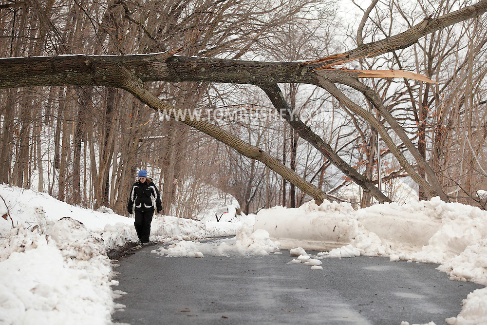 Washingtonville, NY - A woman walks under a fallen tree that took down power lines on Hulsetown Road after  a snow storm on  Feb. 27, 2010.