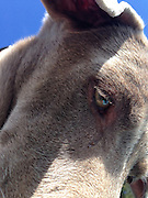 Close-up of Sugar's head from below with the sky above
