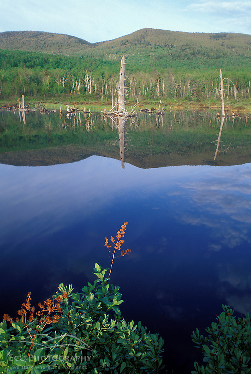 Cranberry Bog Pond, part of  The Nature Conservancy's Bunnell tract.  Northern Forest.  Columbia, NH