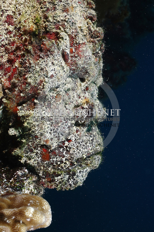 Poisson-pierre (Synanceia verrucosa) Tahiti Polynésie