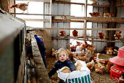 "Emma feeds the chickens at her grandparents farm, Halloran Farm, in Callicoon Center, NY. The Halloran family operates the farm as a business on top of working full time jobs. For Grandmother Ann Halloran watching her grandchildren grow up on the farm is important. She lives by ""Grandma's rule: Make memories here."""