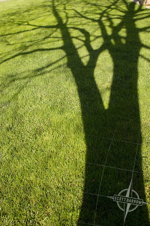 Tree's shadow on grass.