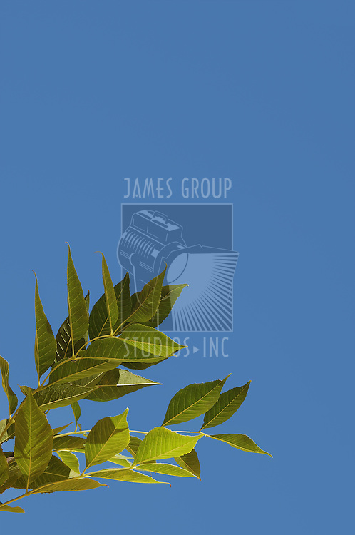 Leafy branch against a blue sky