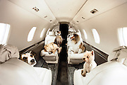 First class Fido: Dogs get their OWN £1,250 seats so they can sit beside their owners on airliners<br />