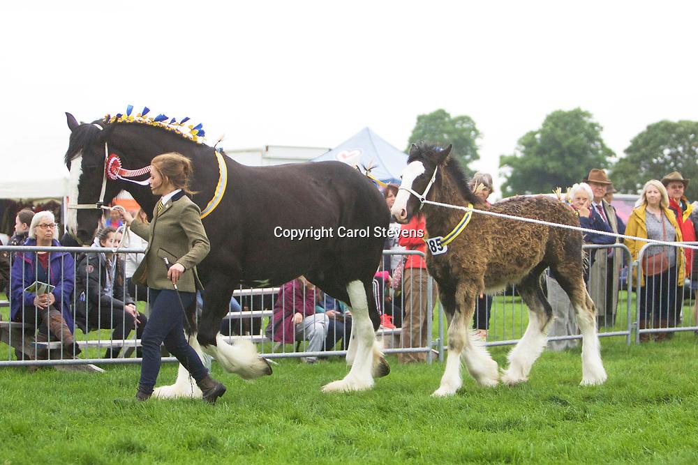 Philip Moss's HILLMOOR ANGELINA with her foal HILLMOOR ARMANI (Winner Foal Class)<br /> Winner  Broodmare Class<br /> Reserve Junior Champion