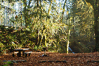 Falls Creek Campground, Lake Quinault. Olympic National Park.