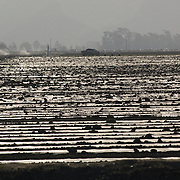 Agriculture work near Oxnard, California, USA.