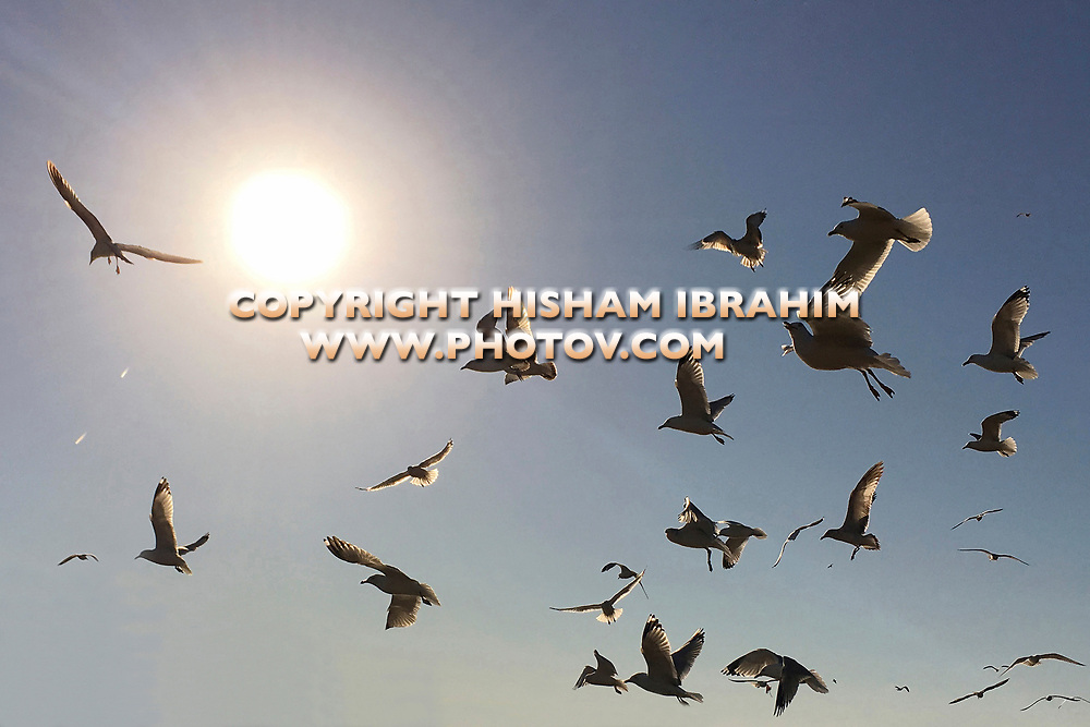 Large group of flying Seagulls in a bright sun light