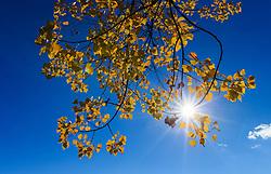 THEMENBILD - ein herbstlich gefärbter Baum mit blättern und durchscheinender Sonne an einem sonnigen Herbsttag, aufgenommen am 21. Oktober 2015, Zell am See, Österreich // an autumnal colored tree with leaves and the sun on a sunny Autumn Day, Zell am See, Austria on 2015/10/21. EXPA Pictures © 2015, PhotoCredit: EXPA/ JFK