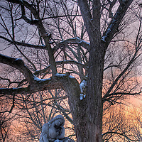 Winter landscape in Calvary Cemetery