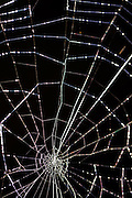 dramatic Intricate spider web on black background