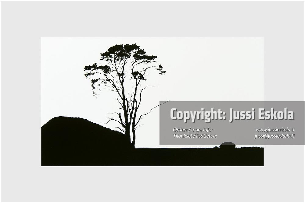 A lone old pine tree at the barren windblown landscape of Jurmo island. The Archipelago Sea, Finland, 1996.