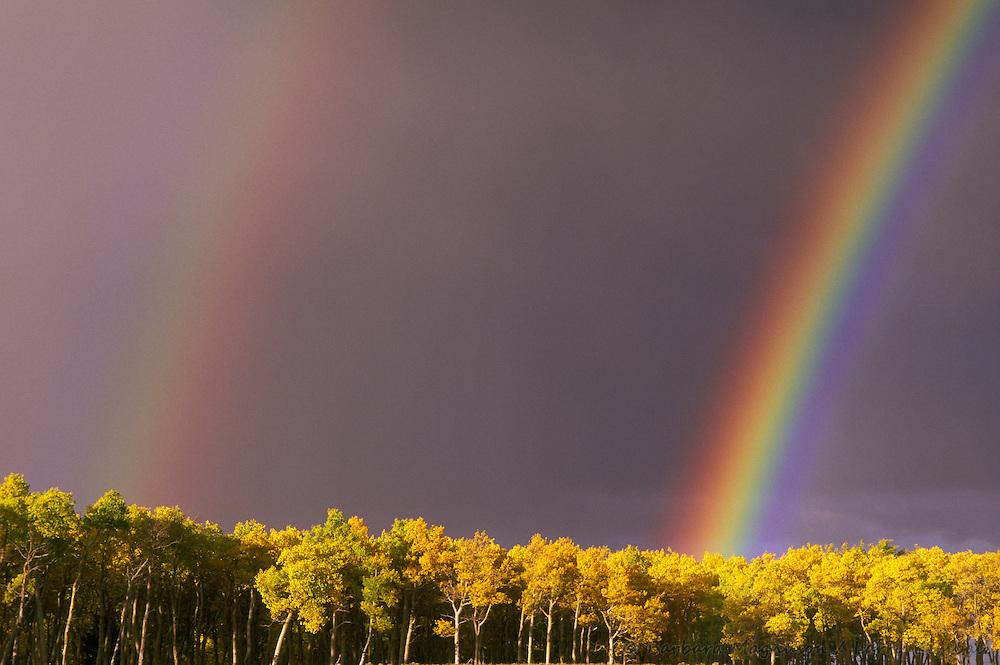 Double rainbows over autumn aspens [Populus tremuloides]; Fremont County, Colorado