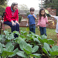 Lauren Wood | Buy at photos.djournal.com<br /> Leandra Daniels, 89, helps Ross White, 3, Mary Bryan Johnson, 4, and Matthew Hammitt, 3, prune collard plants Wednesday afternoon in the garden she helped plant at the Tupelo Montessori School.