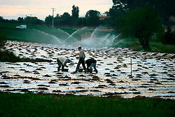 FRANCE PROVENCE AIX EN PROVENCE 3OCT06 - Immigrant workers from North Africa (Maghreb) toil on a farmer's field near Aix en Provence, southern France...jre/Photo by Jiri Rezac..© Jiri Rezac 2006..Contact: +44 (0) 7050 110 417.Mobile:  +44 (0) 7801 337 683.Office:  +44 (0) 20 8968 9635..Email:   jiri@jirirezac.com.Web:    www.jirirezac.com..© All images Jiri Rezac 2006 - All rights reserved.
