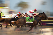 The running of the 2019 Pegasus World Cup Invitational Stakes at Gulfstream Park in Hallandale Beach, Florida, Saturday, January 26, 2019.
