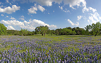 Bluebonnet Panorama, Gillespie County