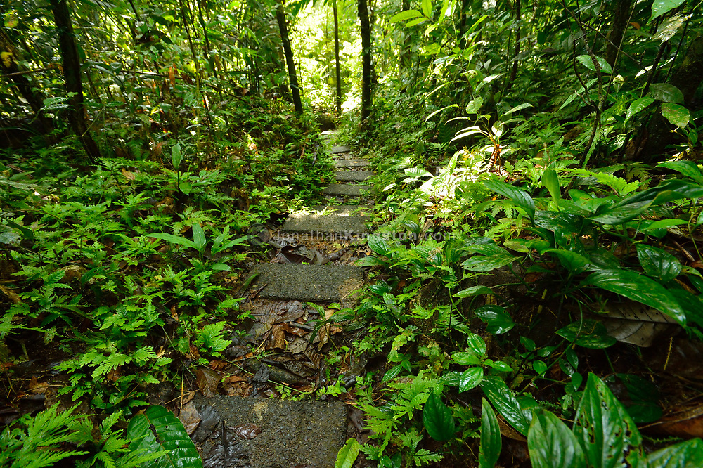 Research trail through the tropical forest of Barro Colorado Island, home to the Smithsonian Tropical Research Institute, Panama.