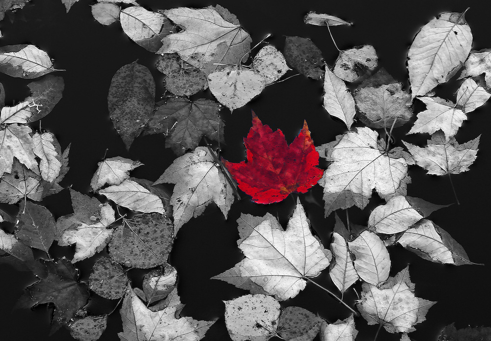 This selective color B&amp;W New Hampshire autumn photography image is available as museum quality photography prints, canvas prints, acrylic prints or metal prints. Prints may be framed and matted to the individual liking and decorating needs: <br />