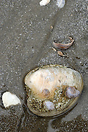 Shell lodged in the sand on Long Island Sound